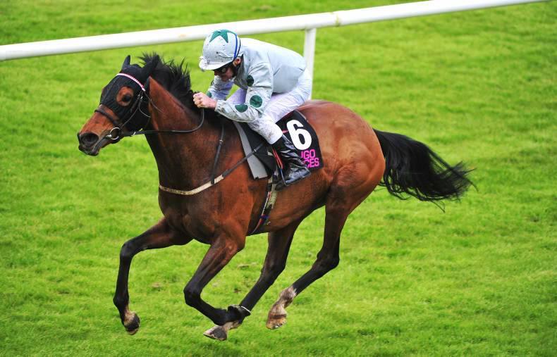 SLIGO SUNDAY: Burke back home with a winner