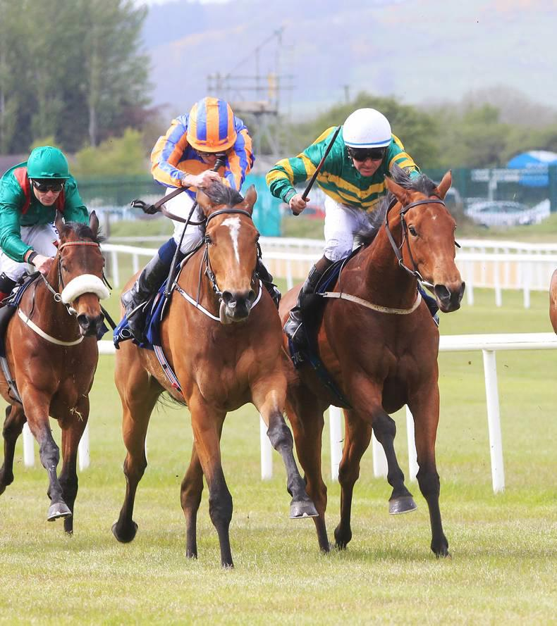 CURRAGH MONDAY: Iveagh Gardens happy on testing ground