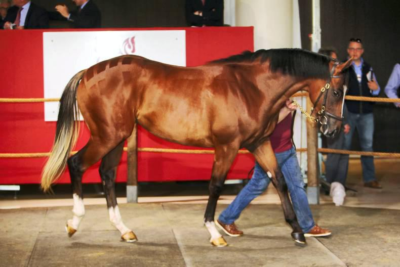 Arqana Breeze-Up: Grove Stud sells top colt and top filly