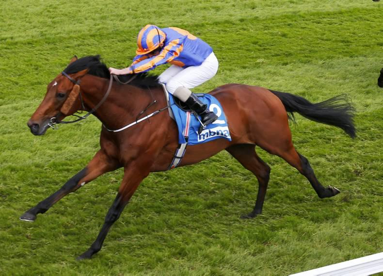 Hans Holbein another classic colt for Montjeu
