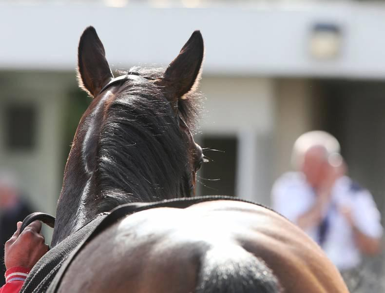 VIEW FROM ABOVE: Northern stallions on the mark