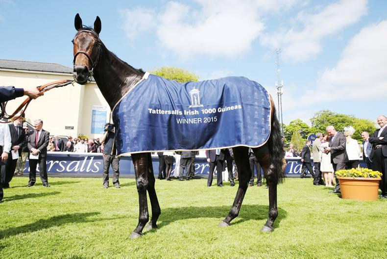 DONN MCCLEAN: Irish 1000 Guineas was a high-class renewal