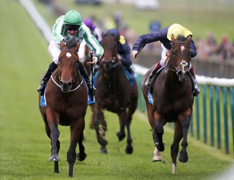 BRITISH PREVIEW: Cable Bay to make hay for Hills