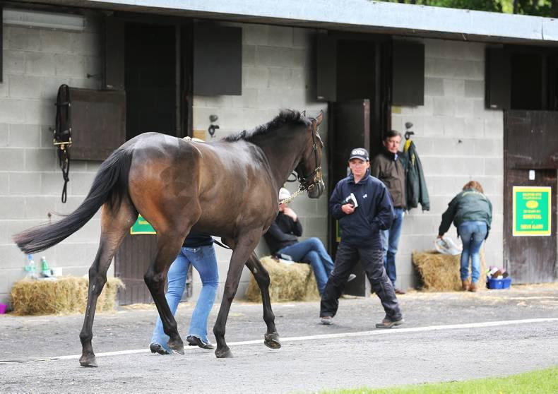 Pinhooker data for the Goffs Land Rover NH Sale