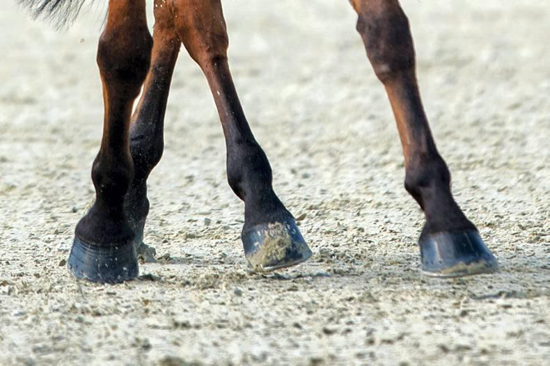 Silver Spurs finals loom for dressage competitors