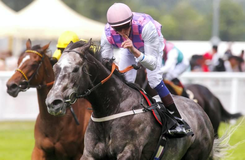 ROYAL ASCOT: O'Meara celebrates Amazing success