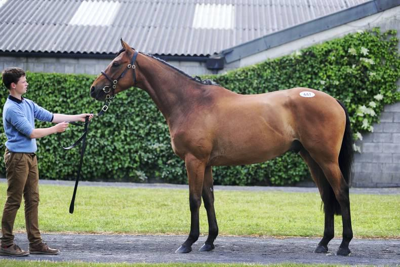Midnight Legend gelding commands €55,000