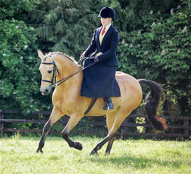 Keen competition for RDS side saddle places