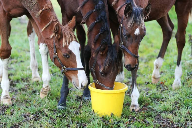 Letter to the Editor: Change Foal Levy system to benefit wider industry