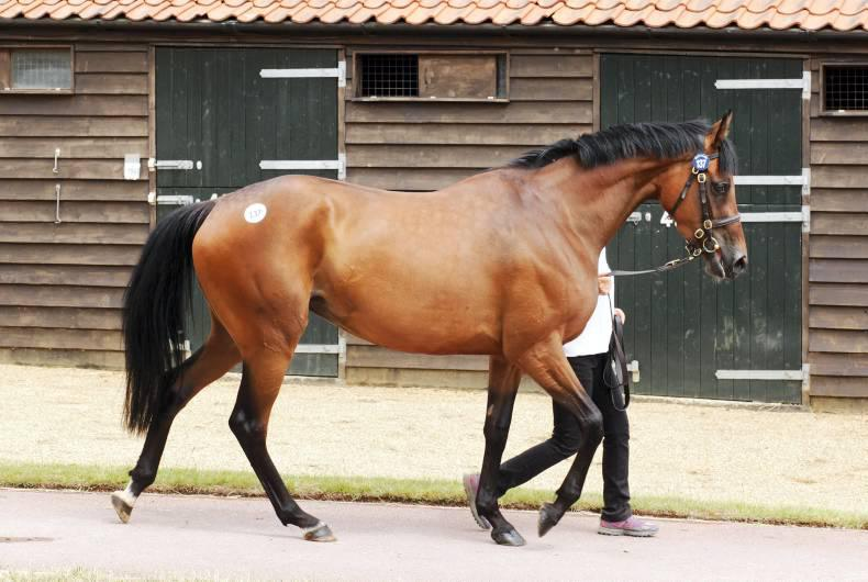 Breeding stock at a premium in Newmarket