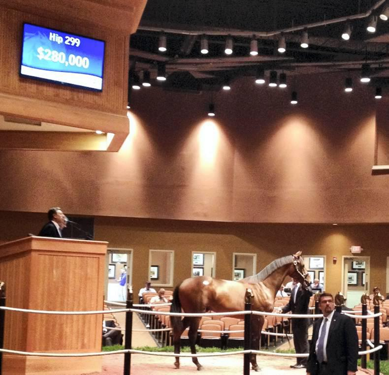Modest increases at first significant yearling sale