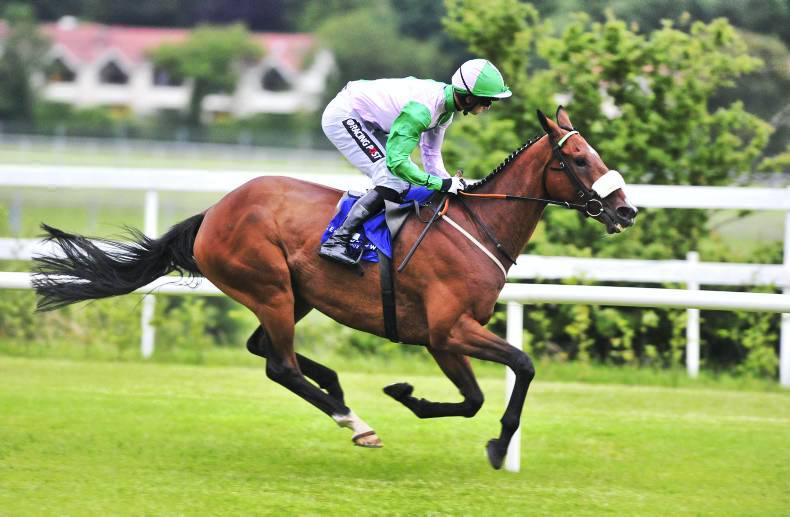 High class entries for Galway Hurdle and Plate