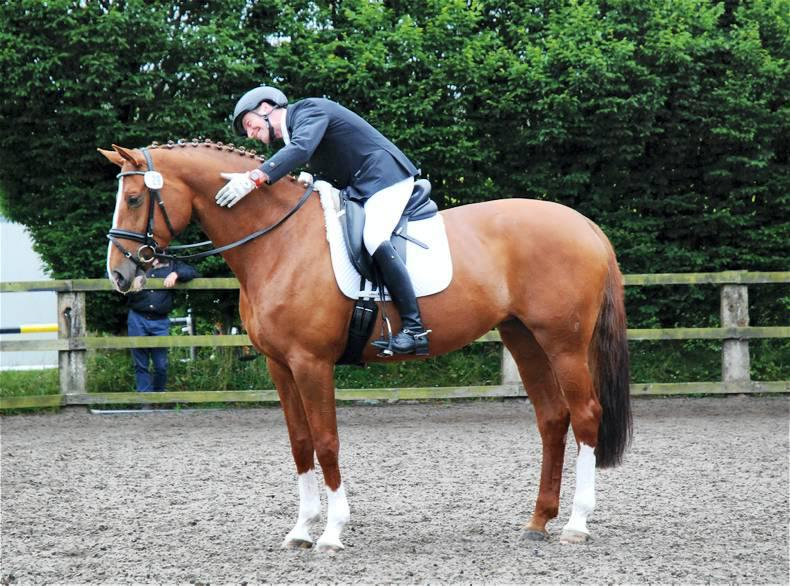 Coilog dressage attracts huge entries