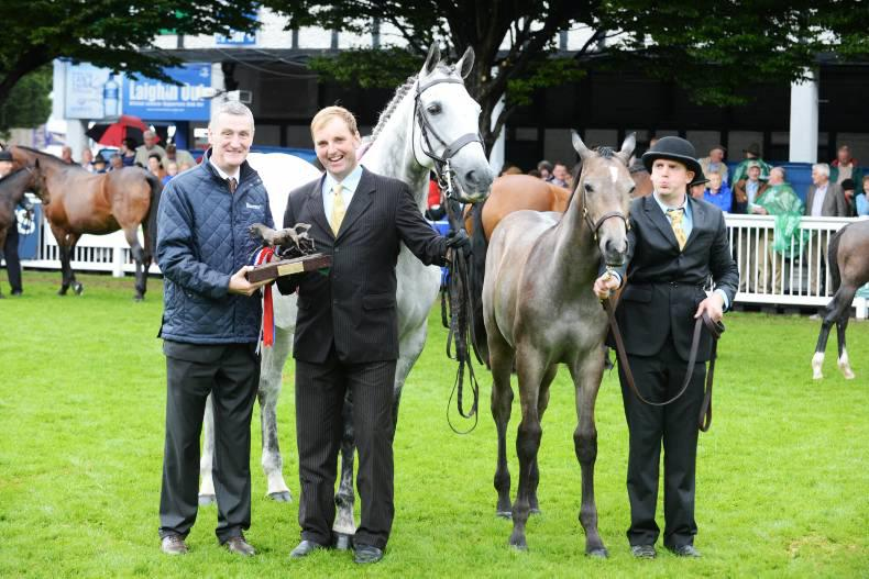 Field of dreams: The Irish Field Breeders Championship
