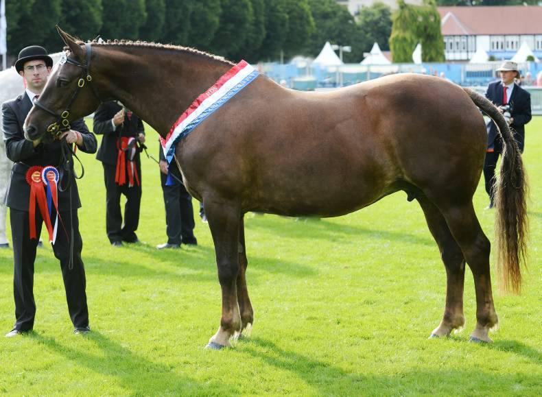 View to Dublin history in the Irish Draught mare championship