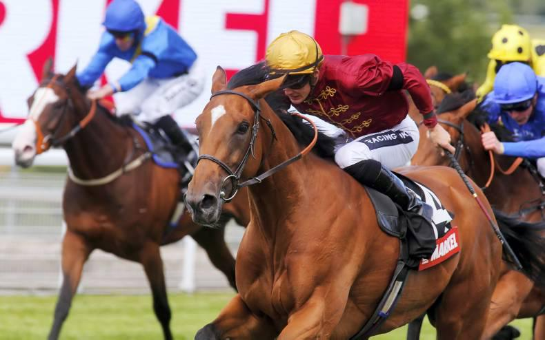 Simple Verse another for Duke Of Marmalade