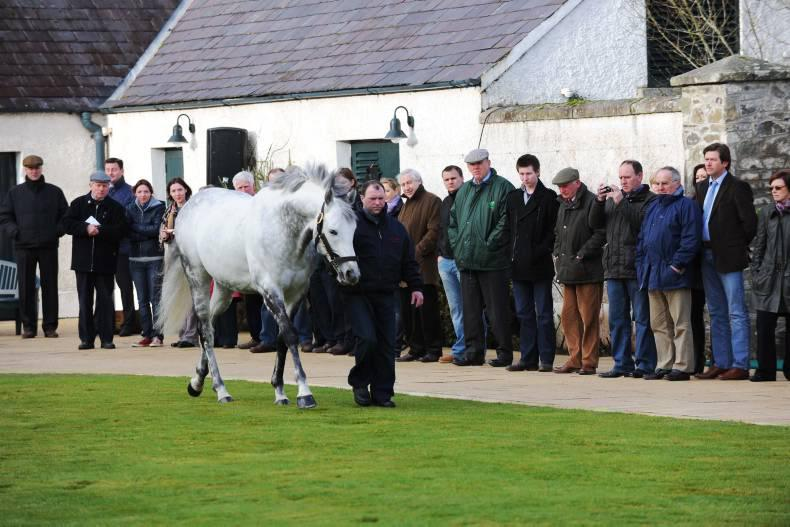 Aga Khan Studs announce stallion moves