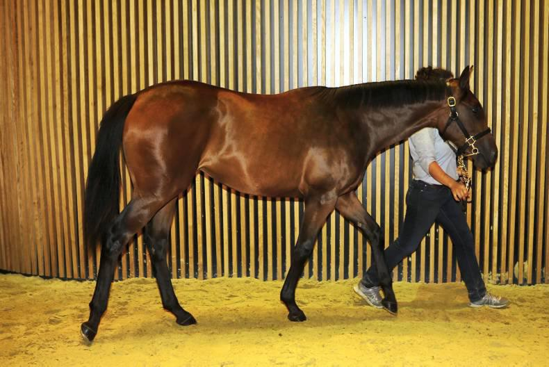 Arqana: Daughter of Dutch Art sets another record