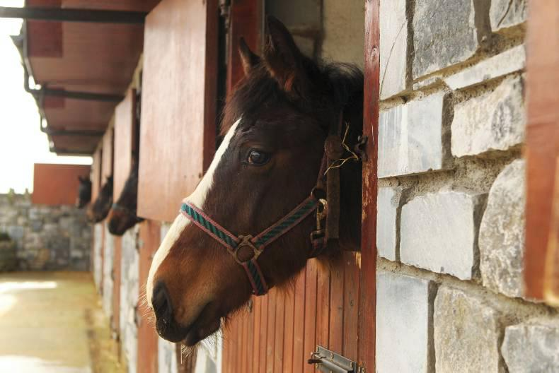 Points soar for equine courses