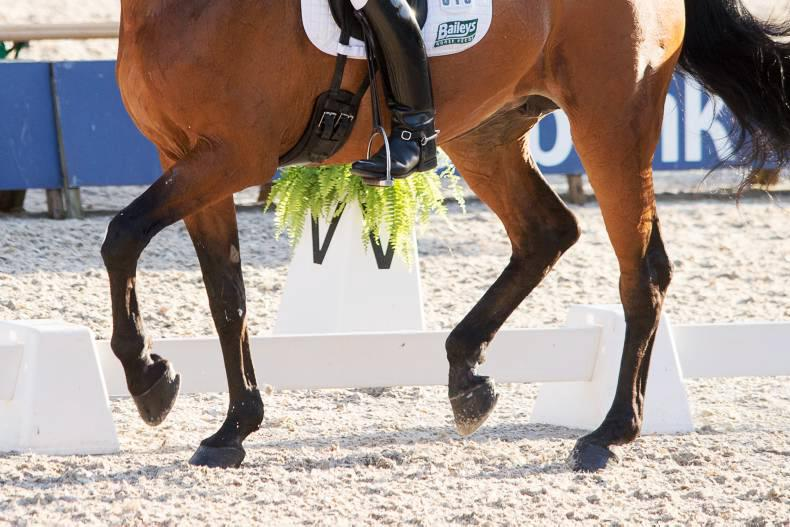 Greenhills win team dressage title for the first time