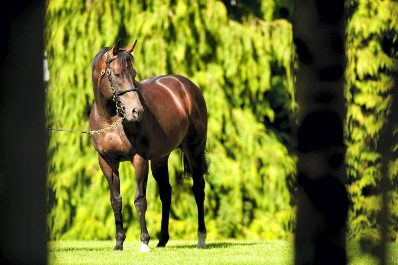 Pedigree Insights: An Invincible weekend for star stallion