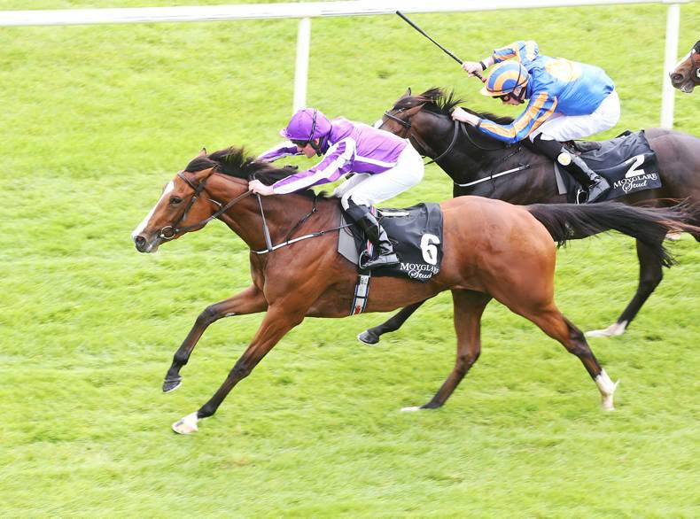 PEDIGREE ANALYSIS: Minding's stamina is not guaranteed