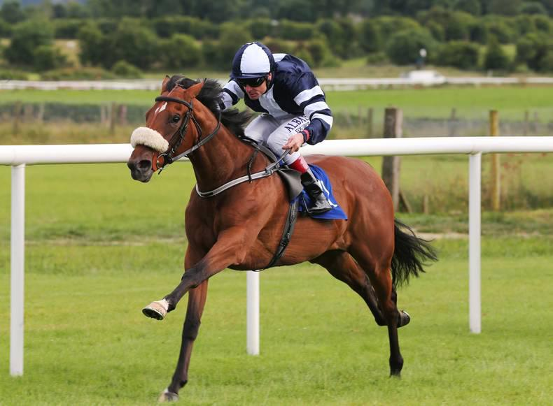 GOWRAN PARK SUNDAY: Jack can get back to winning ways
