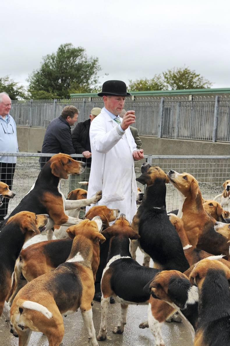 Gala occasion at Duhallow puppy show
