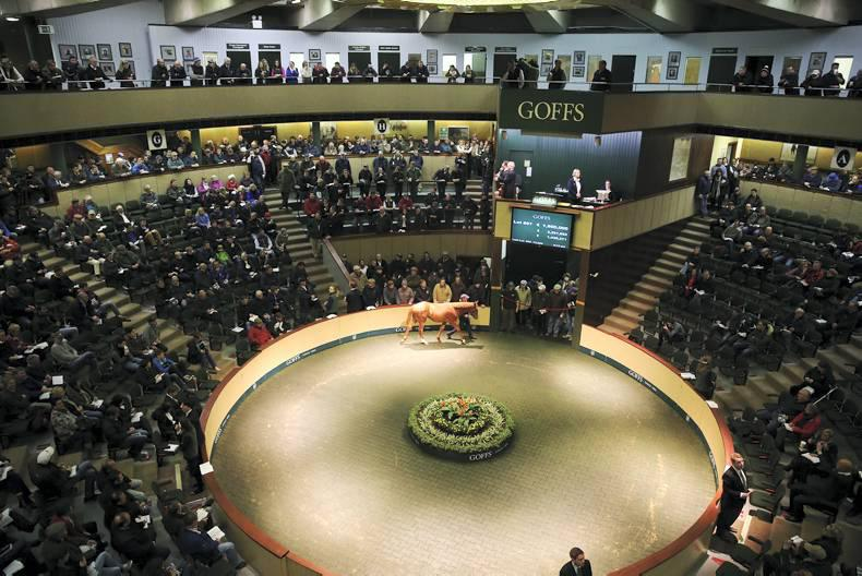 Goffs extends November Foal Sale to five days