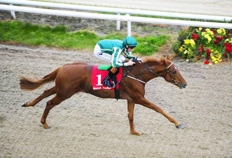 BREEDING INSIGHTS: Progressive Artytype another for Roderic