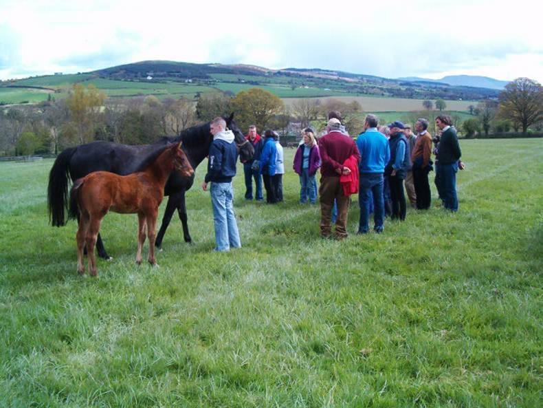 Horse Sport Ireland to set up equine discussion groups