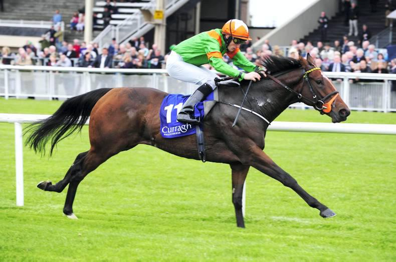 PEDIGREE ANALYSIS: Fort wins gold for Ballylinch Stud