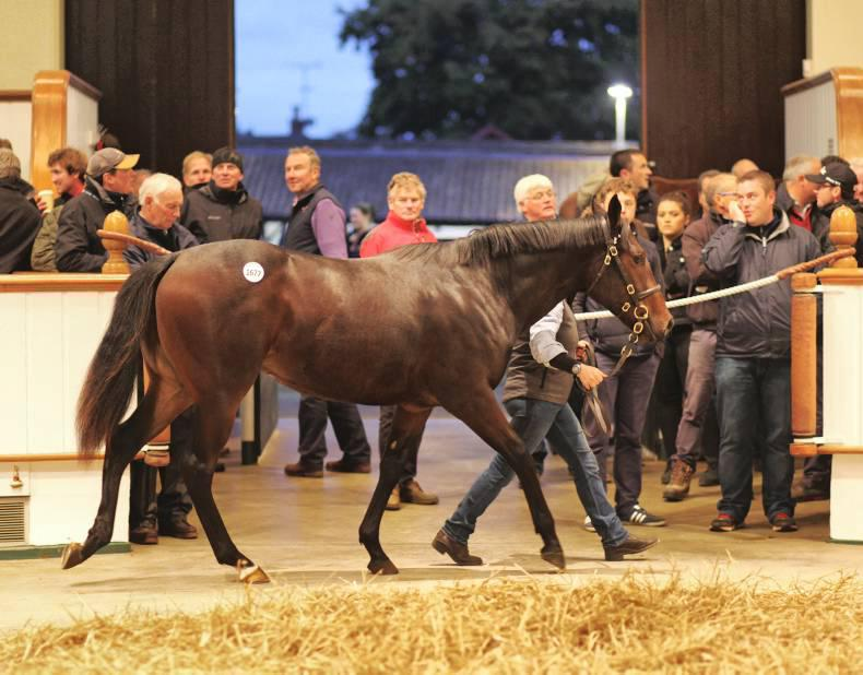 SALES: New record price for Medicean filly