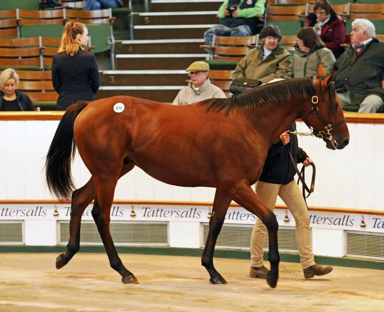 TATTERSALLS OCTOBER YEARLINGS: Ferguson swoops for Dubawi colt