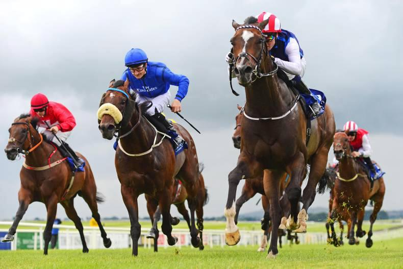 AUTUMN HORSES IN TRAINING SALE: Over 1,650 horses for sale at Newmarket