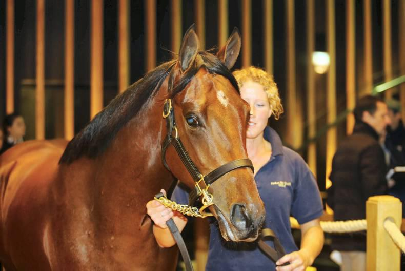 SALES: Manduro colt stands out