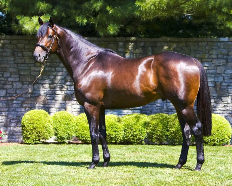 BREEDING INSIGHTS: The busiest American stallions in 2015