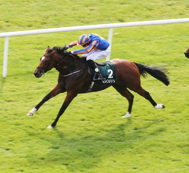 Gleneagles handed €60,000 fee in first season at Coolmore Stud