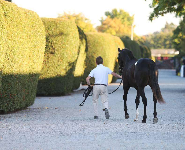 GOFFS OPEN YEARLING & HIT SALE: Prancealot colt is top for O'Ryan
