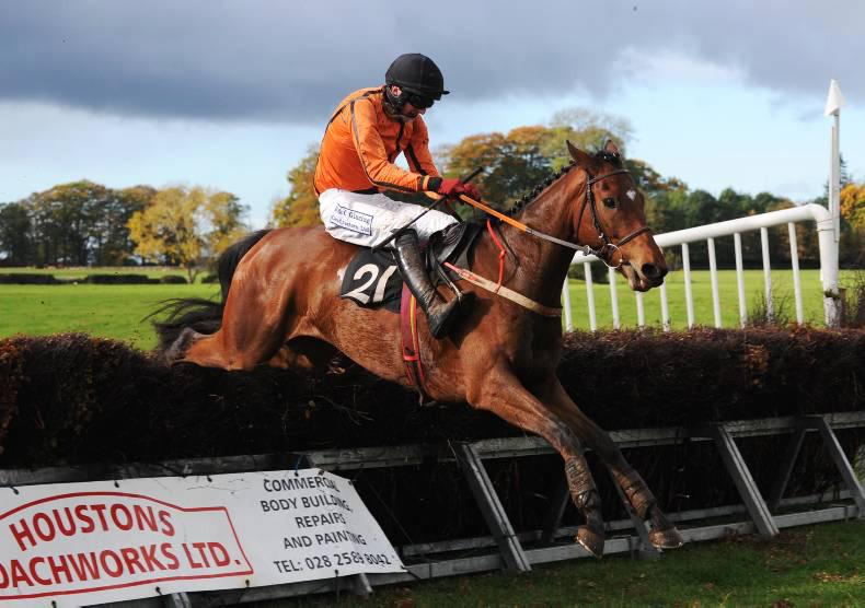 CHELTENHAM NOVEMBER SALE: Quality pointers and young horses