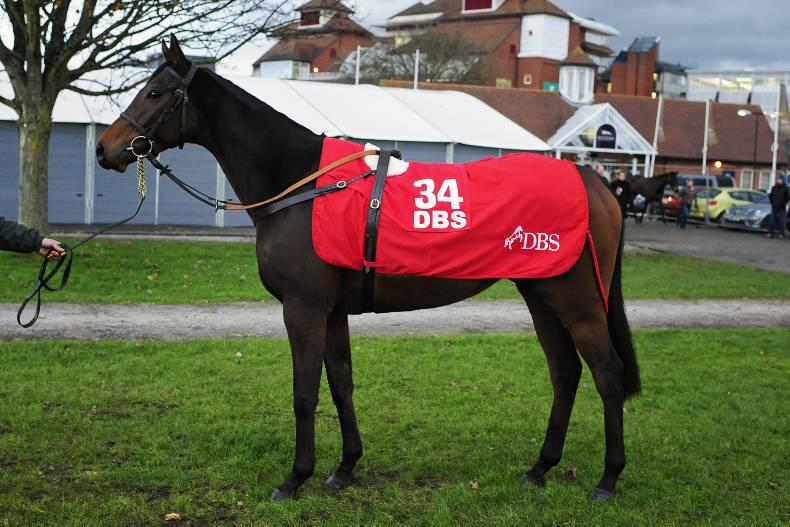 DBS cancels eve-of-Hennessy sale for horses in training
