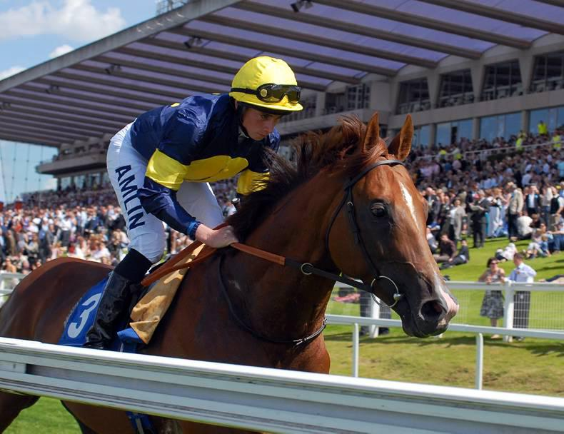BREEDING INSIGHTS: Old Guard is new star