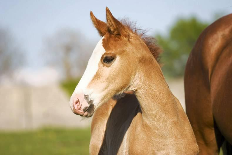 ITBA SEMINAR: Not enough quality horses to go around