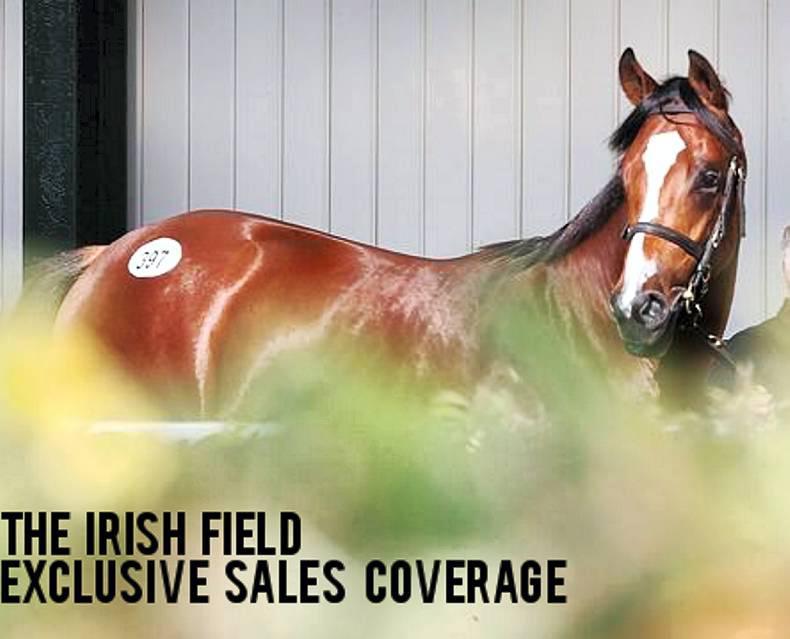 Read The Irish Field's extensive bloodstock sales coverage