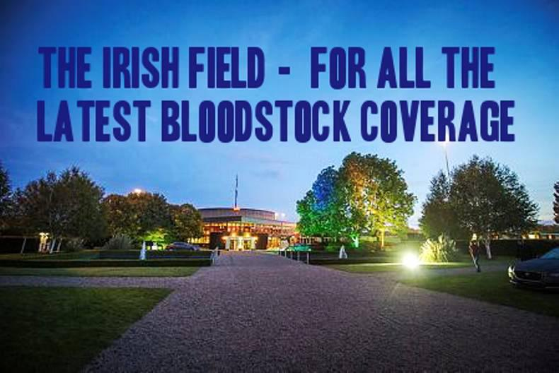 All the latest bloodstock coverage