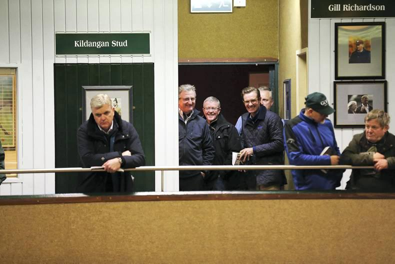 VIDEO: Million euro foal at Goffs