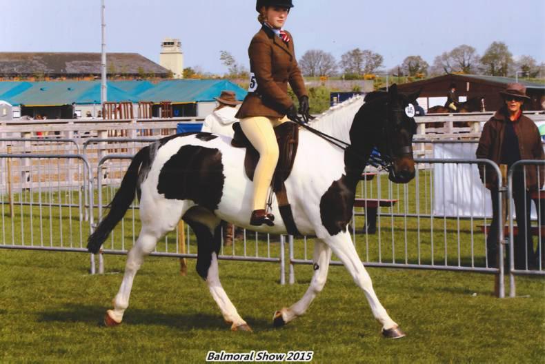 Waterglades Gemini is the star of Welsh ponies