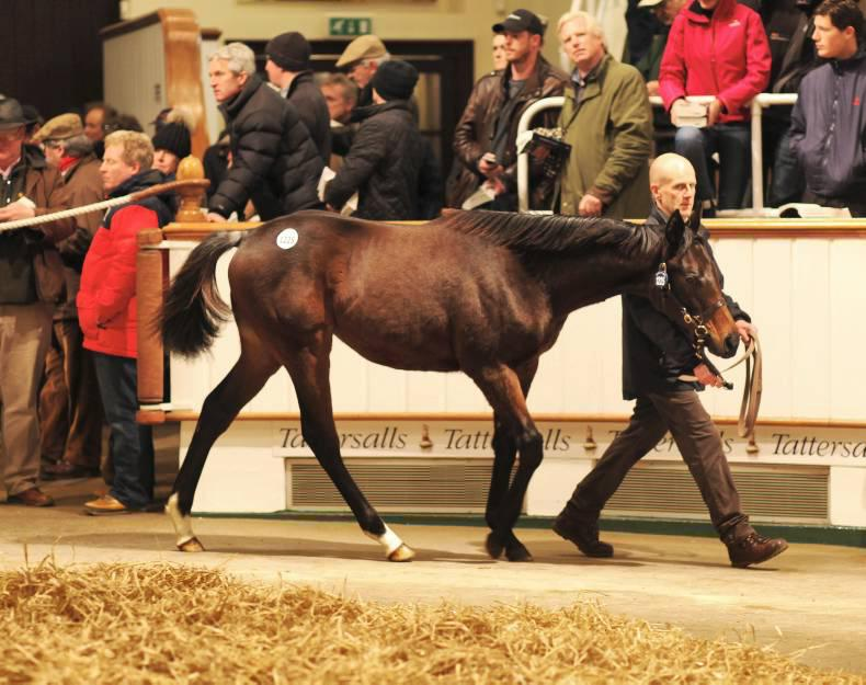 SALES: Record turnover at Tattersalls Foal Sale