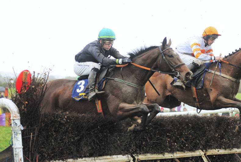 SALES: Smart young jumpers at Cheltenham