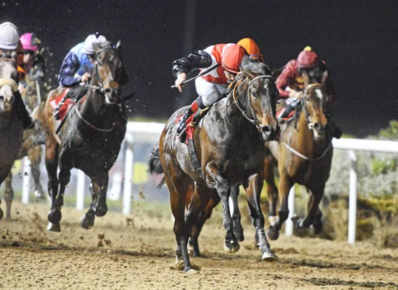 BREEDING INSIGHTS: A great double act at Dundalk